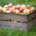 Palmershof, de fruitboerderij in Kesteren